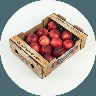 VFSE Box